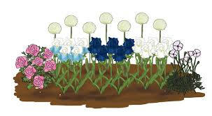 bulb bargain blueberry bliss garden bulb blog flower bulbs