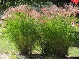 native plant nursery illinois this spring u2026 plant and nurture native plants u2013 vivareston