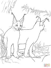 caracal coloring pages coloring home