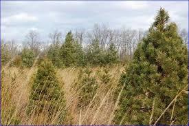 Christmas Tree Farm Va - christmas tree farms virginia home design ideas