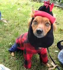 lumberjack costume items similar to paul bunyan lumberjack dog cat pet costume