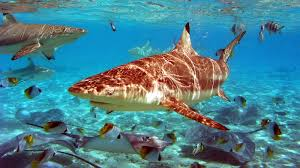 undersea resort beautiful and amazing youtube
