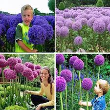 beautiful plants beautiful plants amazon com