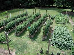 Design A Vegetable Garden Layout Vegetable Garden Layout Home Plans