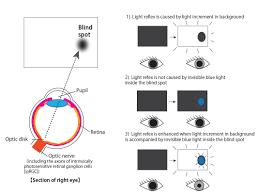 The Blind Mice Reflex Enhanced By Light Inside Blind Spot
