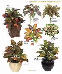 floor plants home decor croton plants for home decor indoor tropical floor accent plants