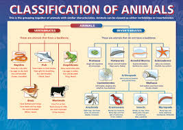 classification of animals dicotomous key taxonomy biology