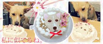 ashudog rakuten global market pet article for the cake birth