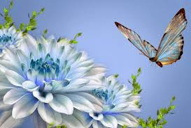 wallpaper islamic informatin site nature wallpaper for desktop