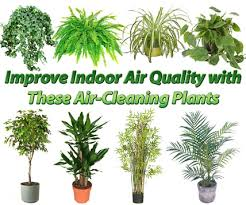 best plants for bedroom 12 plants that naturally remove toxins and purify your air