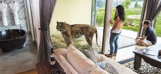 home interior tiger picture 100 home interior tiger picture promo rates on brand new