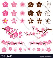 cherry blossoms or flowers ornament vector image