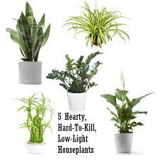 Indoor House Plants Low Light 18 Best Houseplants Images On Pinterest Plants Apartment