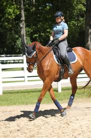 getting control of your horse u0027s shoulders with the leg yield