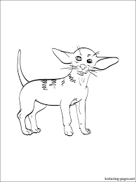 coloring pages chihuahua puppies chihuahua coloring pages chihuahua coloring page dogs coloring page