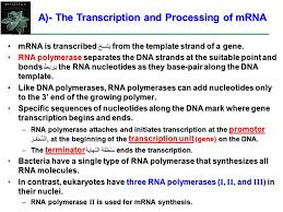 the connection between genes and proteins ppt video online download