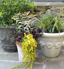 protecting container plants in winter womanswork com