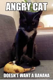 Angry Cat Meme - angry cat doesn t want a banana memescom meme on me me