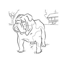 bull dog coloring free download