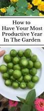 197 best images about garden on pinterest garlic bulb