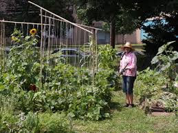 Urban Gardening Philadelphia - green u0027 germantown neighbors rally to save urban farm chestnut