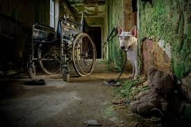 Mysterious Abandoned Places Claire A Bull Terrier And His Owner Alice Van Kempen Explore
