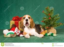 cute dog christmas wallpapers beagle christmas wallpaper animals wallpaper