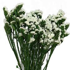 statice flowers preserved flowers statice sinuata white