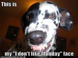 Monday Funny Meme - my monday face humordog funny dog pictures funny dog memes