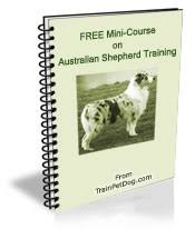 training a australian shepherd dogs u003e u003e australian shepherd free training course on australian