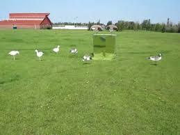 Homemade Goose Blind Mirror Goose Blind Youtube