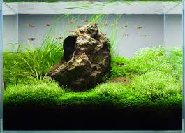 Aquascape Layout Secrets To Successful Iwagumi Stone Arrangement Aquatic Garden