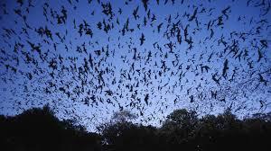 halloween pastel background bats wallpapers group 68