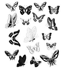 butterfly vector 279870 by ksym on vectorstock vector