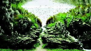 amano aquascape the surreal submarine world of aquascaping amuse