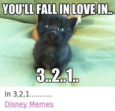 Grumpy Cat Photo 1 Best - 25 best memes about grumpy cat grumpy cat memes