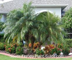 small landscaping trees design home ideas pictures homecolors