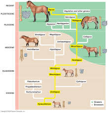 horse phylogeny images reverse search
