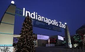 christmas lights at the zoo indianapolis christmas at the indianapolis zoo christmas indy zoo zoos