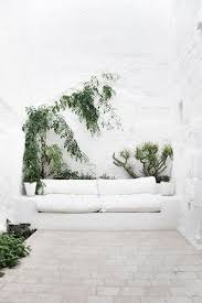 best inspirations to make indoor wall climbing plants indoor