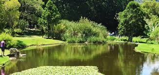 Kirstenbosch Botanical Gardens Visit Kirstenbosch Botanical Gardens