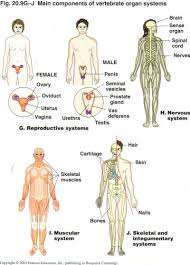 gallery mail to fimal body part human anatomy diagram