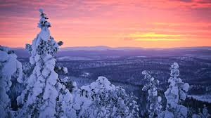 wallpaper frozen trees winter sunrise hd nature 5322