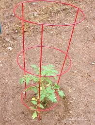 excellent raspberry video real life garden solutions