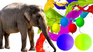 learn rainbow colors with elephants elephant color song