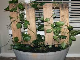 houseplant trellis diy pallet trellis