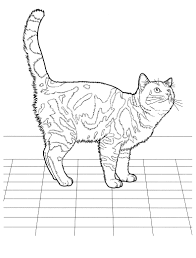 cat 35 cats coloring pages for teens and adults favorite cat