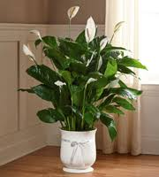 king soopers floral king soopers sympathy denver co 80223 ftd florist flower and