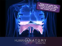 Anatomy Videos Free Download Popar Human Anatomy Android Apps On Google Play