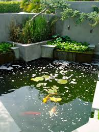 Catfish Backyard Pond by Build A Backyard Fish Pond Without Going Belly Up